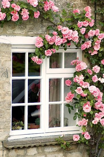 Stone-Rose Covered Cottage - I don't have a stone cottage but I'd love to have a rose climbing up the art studio wall!