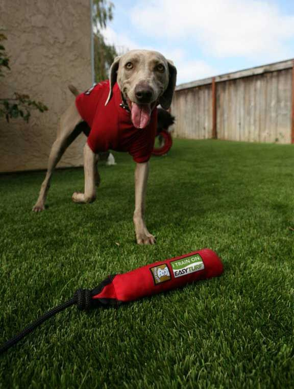 dog grass dog urine perfect pet pet turf pet owners pet friends