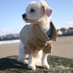 Westerly Trench Coat for dogs!? SO CUTE: Wester Trench, Dogs Fashionista, Doggies Care, Doggies Style, Trench Coats, Fashion Doggiwat Com, Products, Doggies Fashion, Animal