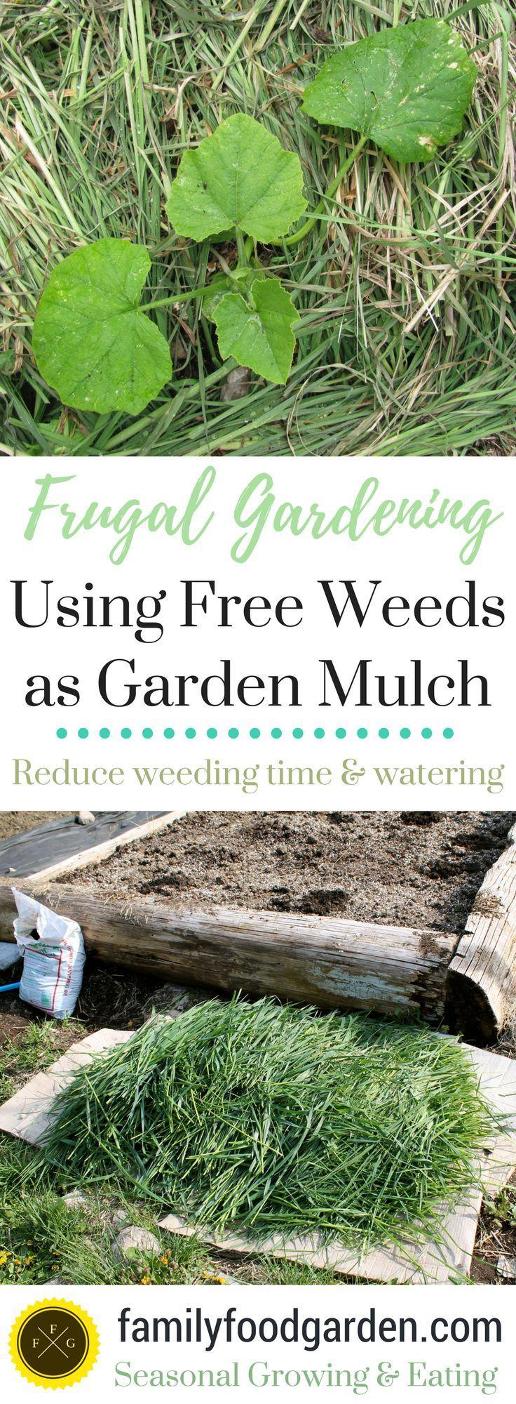 Using weeds as free garden mulch - frugal gardening tips