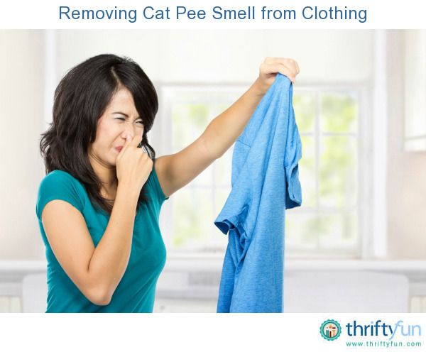 17 Best Ideas About Cat Pee On Pinterest Cat Urine Cat