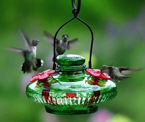 p pole feeder deck with hummingbird humming bird