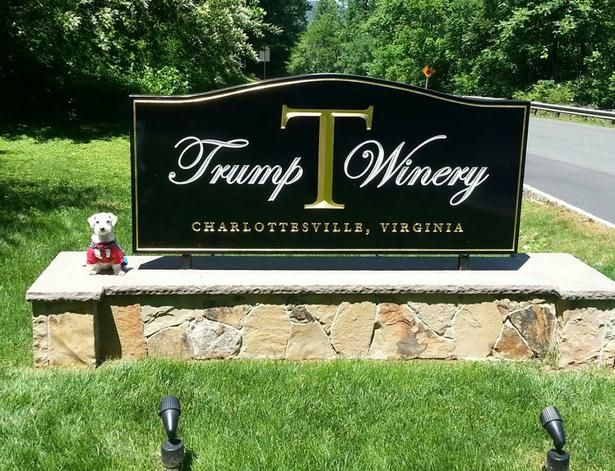 Taste The White Red And Sparkling Wines Of Dog Friendly Trump Winery