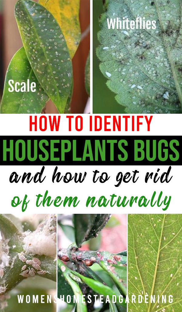 Types Of Houseplant Bugs Who They Are And What To Do About Them In 2020 Plant Bugs Types Of Houseplants Plants