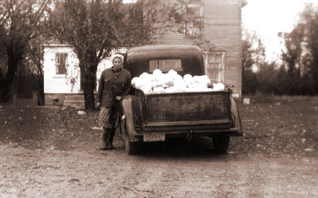 Making kraut was serious business for Barbara's mom, Cecelia Karas (here with a truckload of cabbages).
