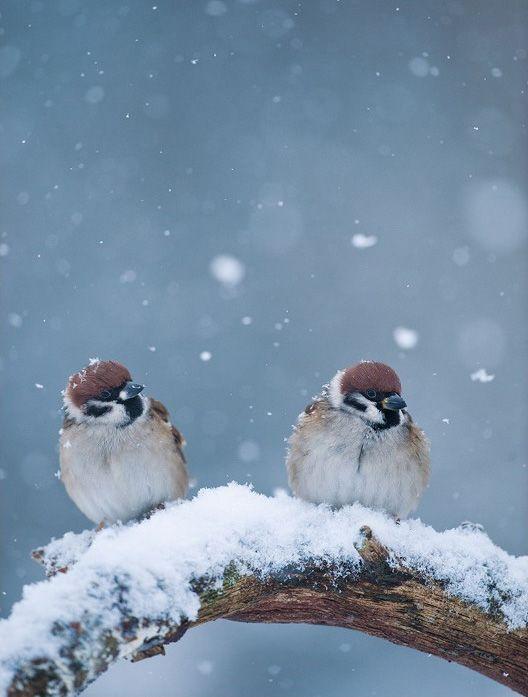 雪の中でスズメ