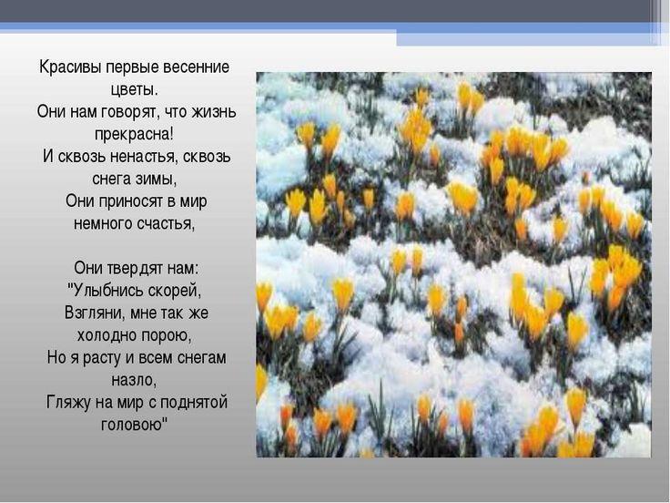 """Презентация """"Первые весенние цветы"""" - скачать бесплатно"""