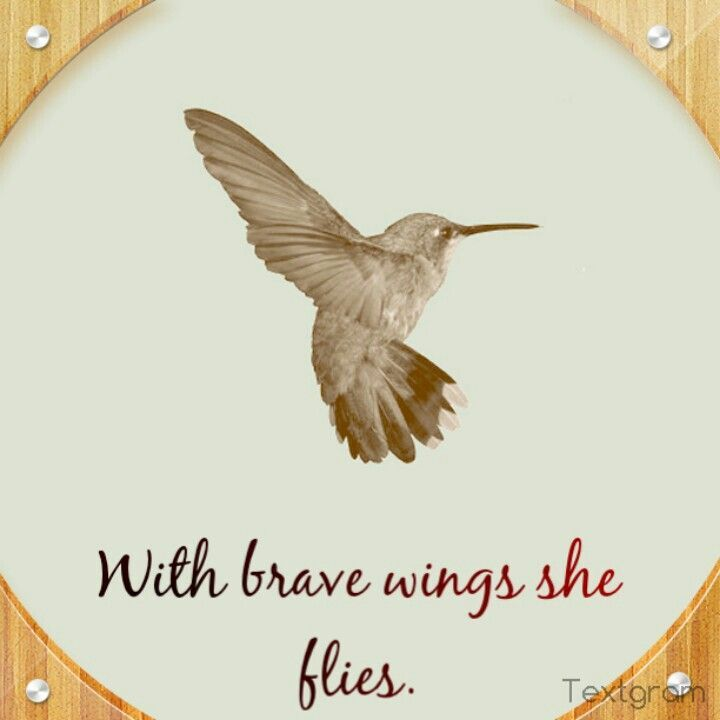 Hummingbird Quotes - Bing images