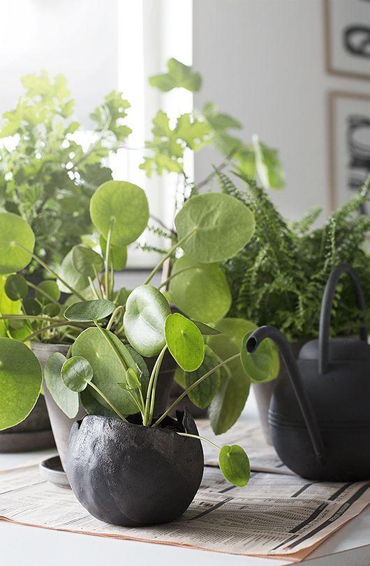 #plants #indoor =plants #vases #decorativeplants - Trendenser.se - en av Sveriges största inredningsbloggar