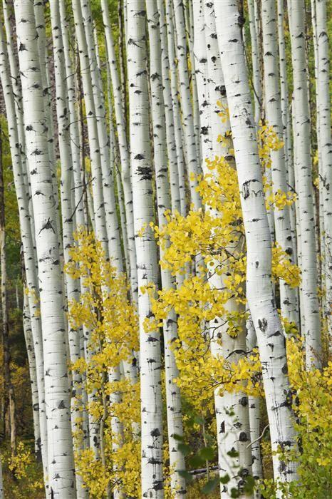 44 best Artful Autumn images on Pinterest | Oil on canvas, Oil ...