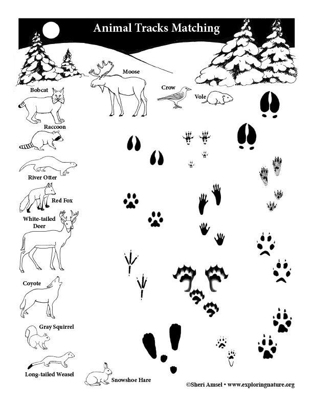 Pin On Animal Activities