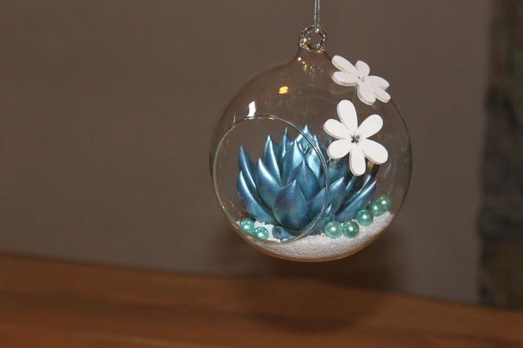 Echeveria Miranda Metallic Blue in glass