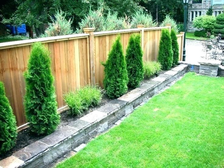 Shrubs To Plant Along Fence Best Plants For Fence Line Trees To Plant Along Fence Privacy Trees Small Backyard Landscaping Small Garden Fence Fence Landscaping