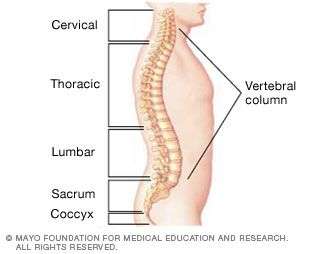 Check out these causes of back pain and stay tuned for our segment on simple stretches that help with posture.