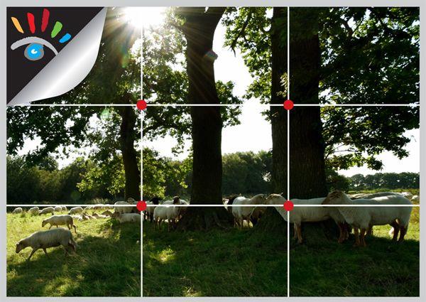 Regel van drie / Regel van Derden. Veel voorkomende foutjes in de fotografie is dat je de auto-focus in het midden van je zoeker zet, dit geeft een saai beeld.  Regel van drie, deze regel is vrij eenvoudig toe te passen. Deel het beeld in de zoeker van de camera denkbeeldig zowel horizontaal als verticaal in drieën. Je krijgt nu vier snijpunten, plaats je onderwerp niet in het midden maar op één van de vier snijvlakken en je zult zien dat de foto veel spannender wordt…