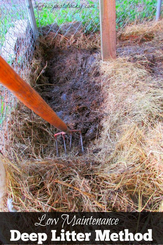 how to keep your chicken coop clean 2