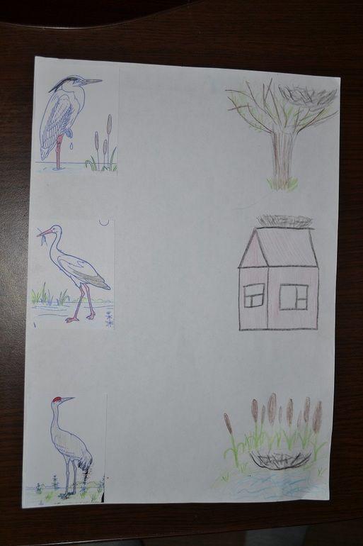 Дикие птицы. Часть первая. - Раннее развитие - Babyblog.ru