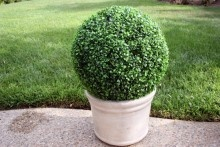 "19"" Artificial Boxwood Topiary Ball. Evergreen and very durable. For indoor and Outdoor use."