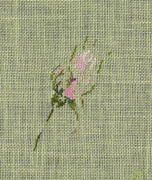 http://www.archive-host2.com/membres/images/1336321151/fleurs/roses/boutons/bv-300l.jpg
