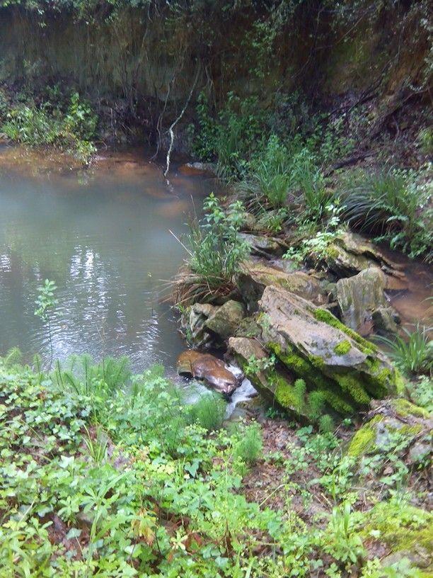 bosco di Gravina in Puglia