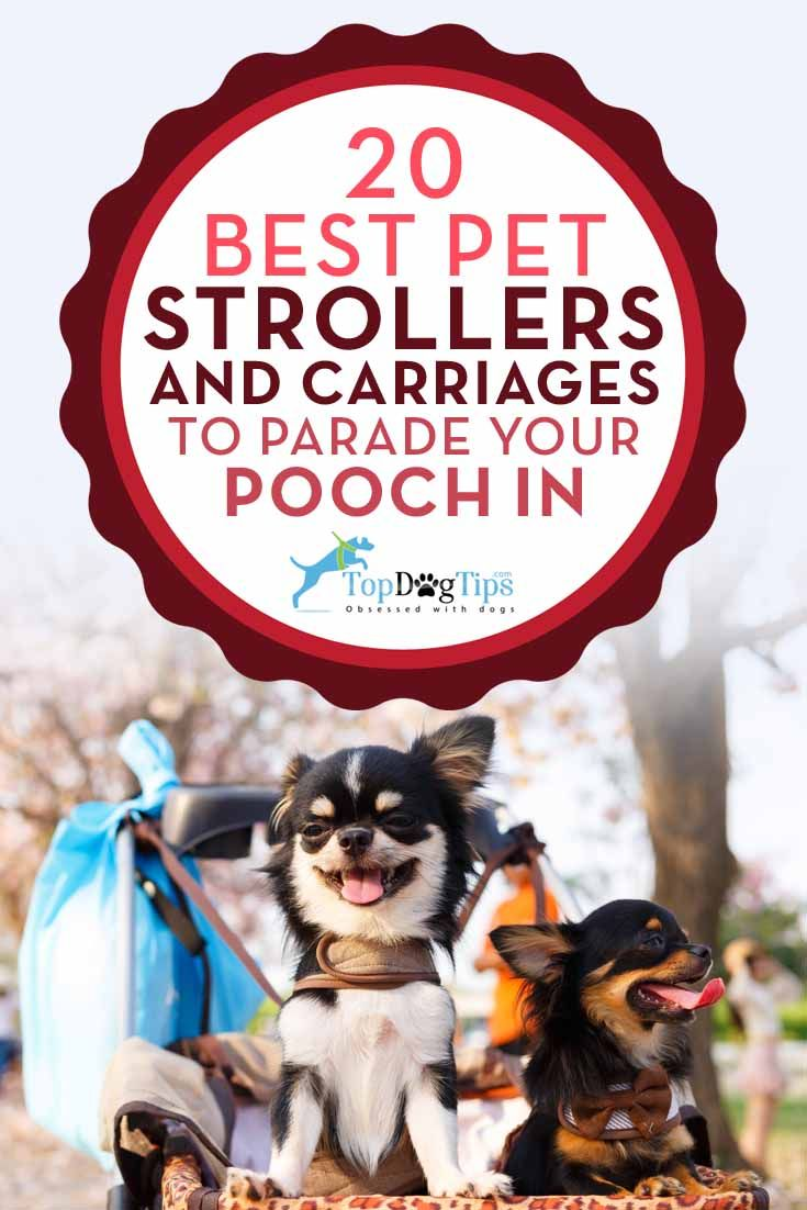 Top 20 Best Dog Strollers and Carriages for Pets & How to Pick? There are times when dog owners prefer to use pet strollers for dogs when going to a park, or for a jog, or to the beach, or anywhere else. Nobody needs an excuse to have a stroller for dogs, but now the question is, what are the best dog strollers or carriages that work well with pets? #dogs #pets #strollers #dogpark