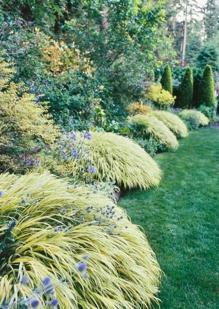 351 best images about ornamental grasses in the garden on for Japanese mounding grass