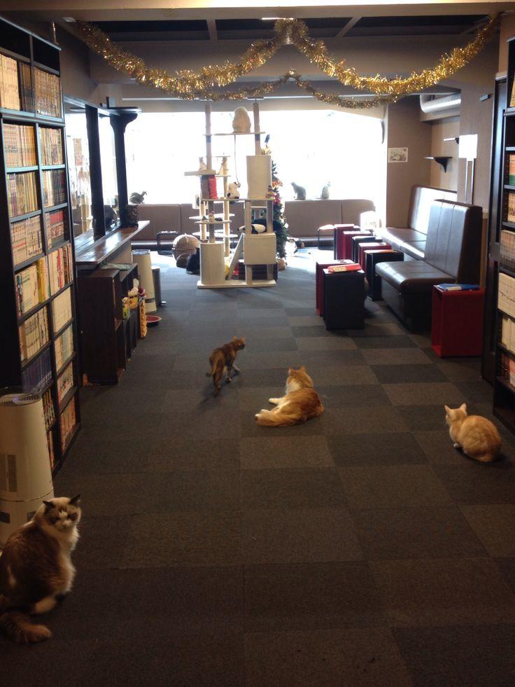 Best Cat Cafe In Tokyo