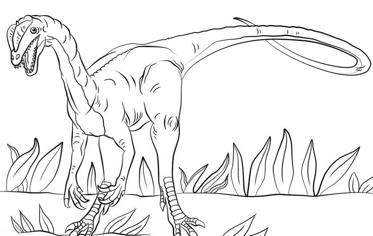 This Is The Black And White Image Of Dinosaur Jurassic Park Dilophosaurus Coloring Page That You Can Print Or Color Online For Fr Dinosaur Coloring Pages Dinosaur Coloring Jurassic Park