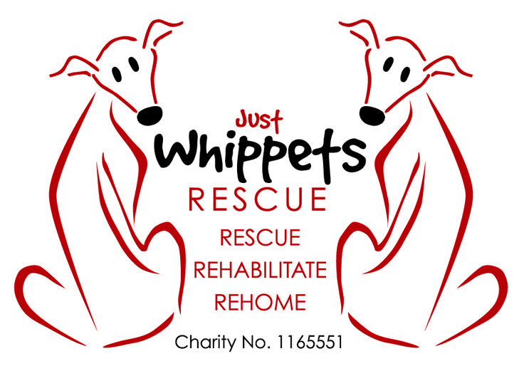 Cagney and Lacey - Whippet X | Just Whippets Rescue