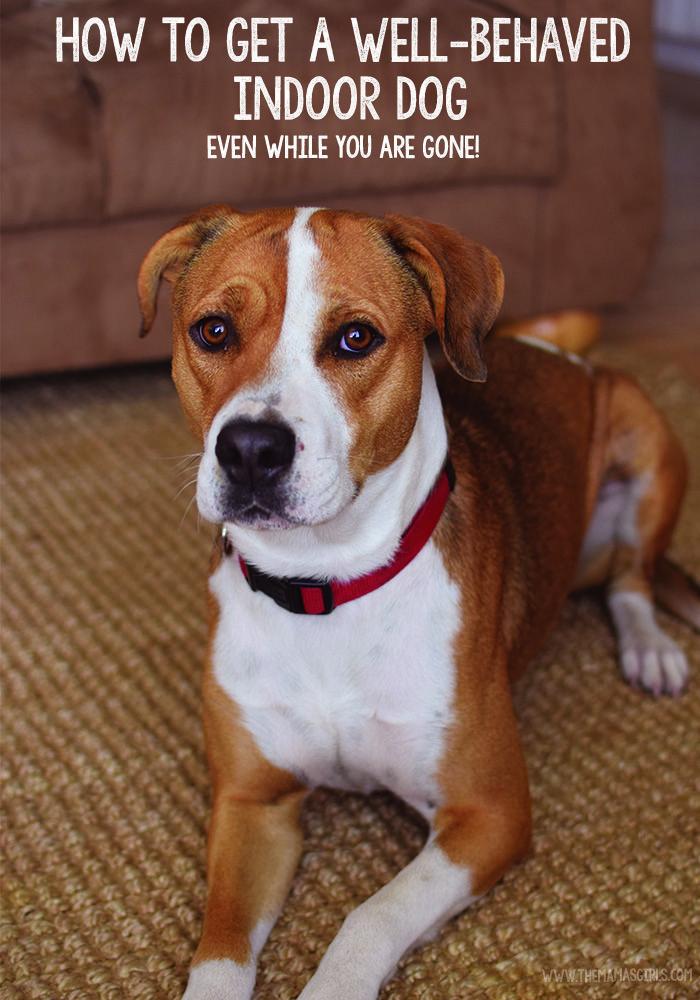 Les 1225 Meilleures Images Du Tableau Dog Tips Sur