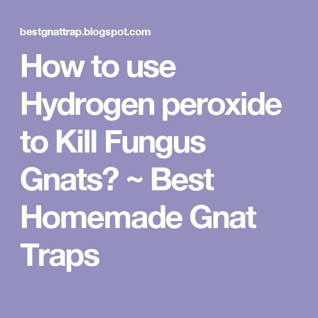 How To Use Hydrogen Peroxide To Kill Fungus Gnats Best