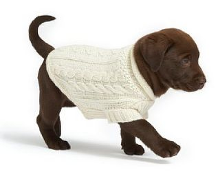 puppy in sweater. *tears* :')