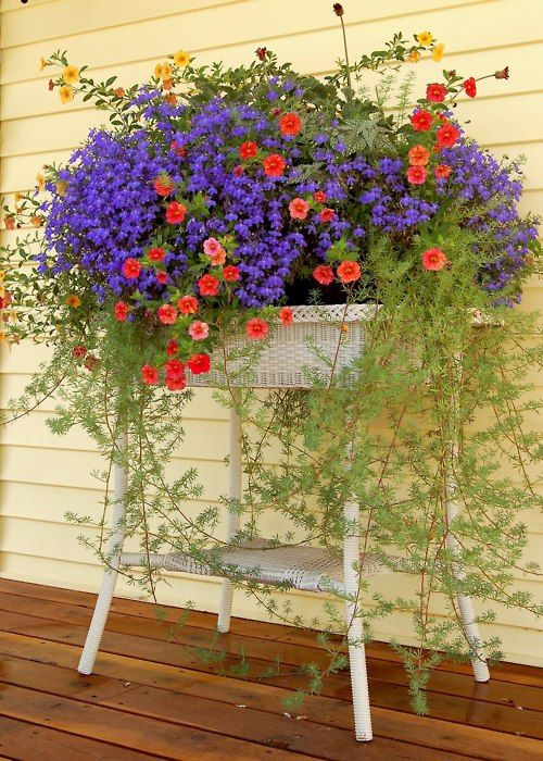 Summer stunner! These colors looks so pretty together. Purple, red, gold and green....make a beautiful container to place anywhere we would like!!