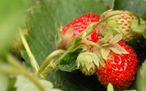 What are the best fruits and vegetables to grow in the garden?