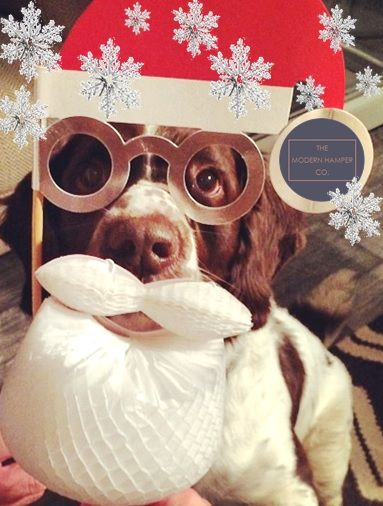 Our furry friend is getting into the festive spirit. Spoil your dog this Christmas with a Modern Mutt hamper: www.themodernhamper.com #themodernhamper #furryfriend #festivegifts