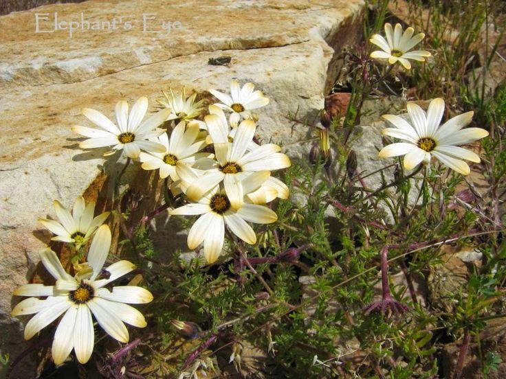 Image result for skilpad namaqua national park