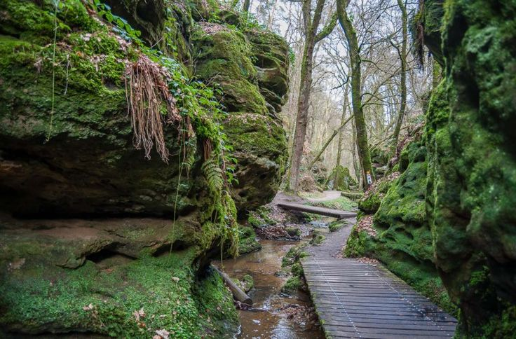 The Mullerthal trail at Aesbachtal