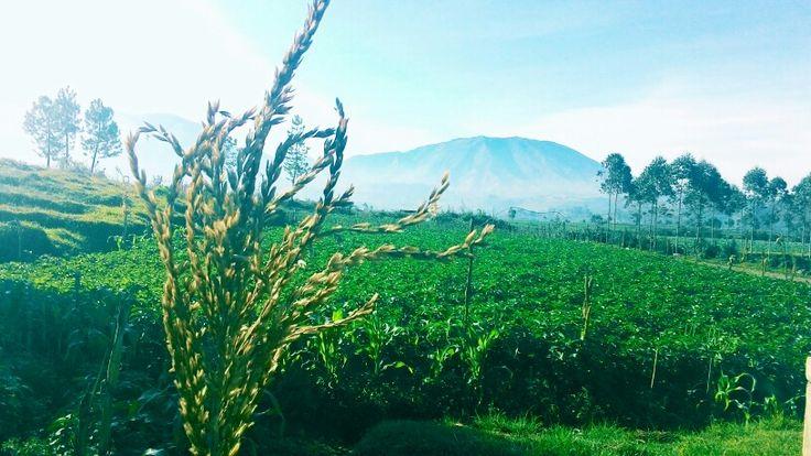 Dieng Wonosobo, Indonesia. #highlands