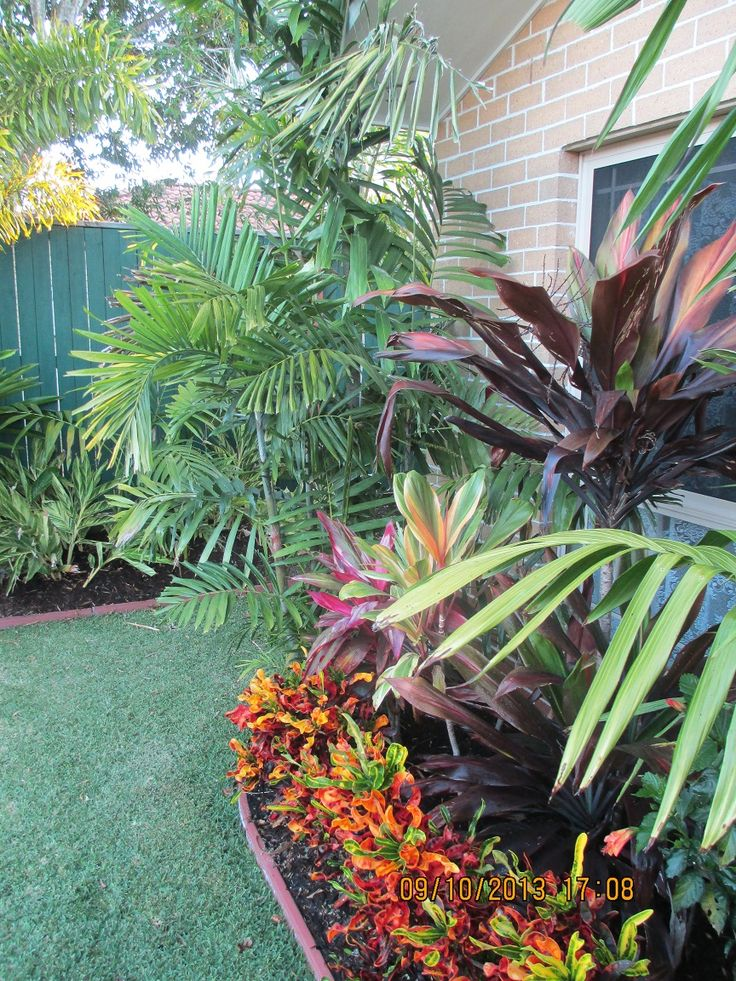 Ptychosperma macarthurii croton border cordylines for Garden ideas brisbane