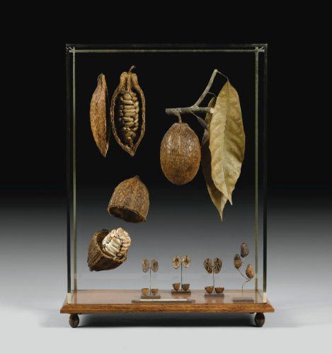 Theobroma cacao (région de Sambirano, Madagascar)   Lot   Sotheby's