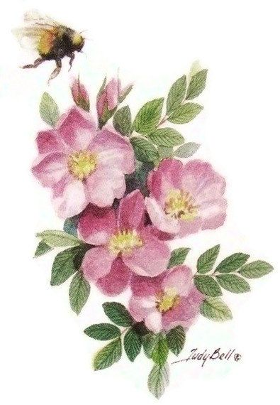 Prairie Roses and Bumble Bee Watercolor by judithbelloriginals