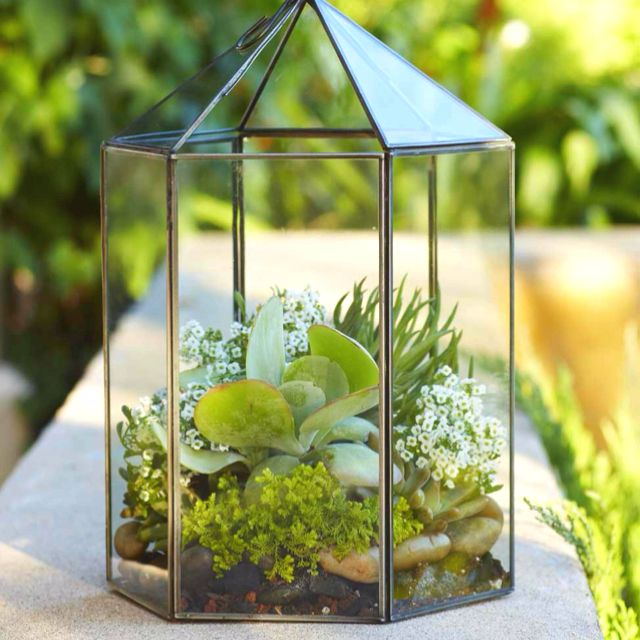 Terrific Terrarium