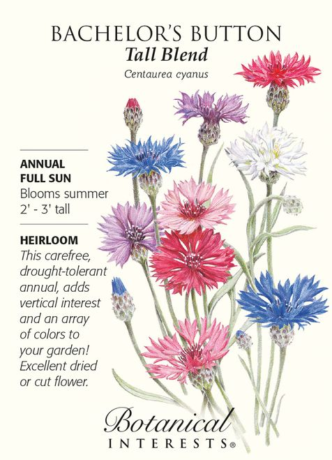 Annual. Bachelor's button, also known as cornflower, is drought tolerant and needs little pampering. Flowers are great for cutting or drying and the edible petals are beautiful sprinkled on a salad. B