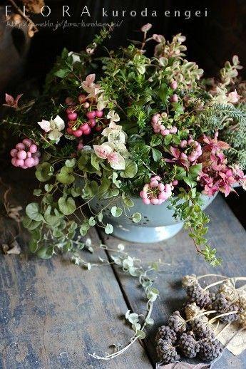 ペルネチアを使って。。。  フローラのガーデニング・園芸作業日記