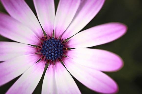 Flower by @Lili Ana