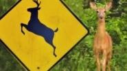 Deer Crossing Radio Call. A woman seriously misunderstands the reason behind Deer Crossing signs. Must listen! It's hilarious!