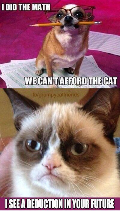 451d9422ac4f2515e3fa8dc027f5a609 grumpy cat quotes grumpy cat meme 315 best grumpy cat images on pinterest funny animal, funny