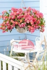 Hanging basket Drift Roses Collection