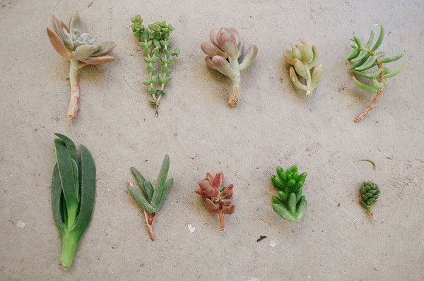 Best 25 plant cuttings ideas on pinterest propogating for How to keep succulents alive indoors