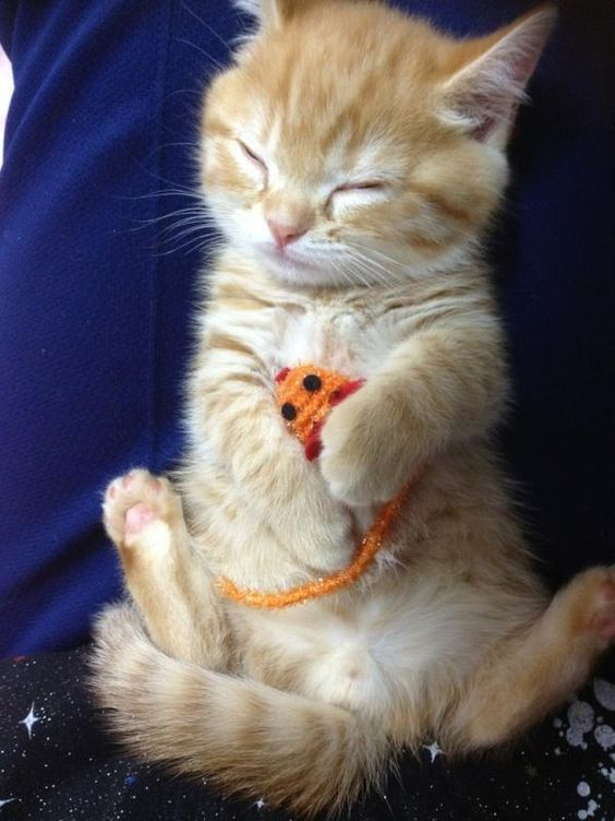 Cutie patootie !!     ........................................................ Please save this pin... ...........................................................   Because for how to tips - Click on the following  link!  http://www.TeachingHow.com